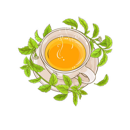 cup of stevia tea illustration on white background