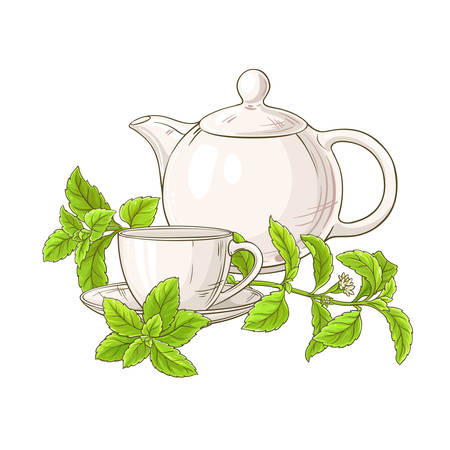 stevia tea in teapot illustration on white background