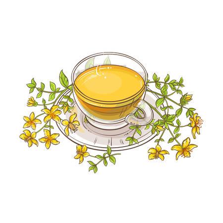 tutsan tea illustration on white background