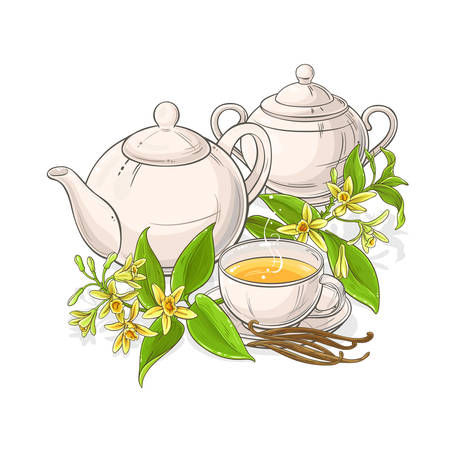 vanilla tea illustration on white background
