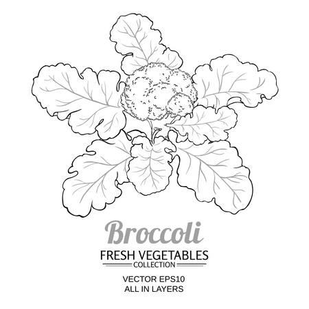 broccoli plant vector isolated on white background Stock Illustratie
