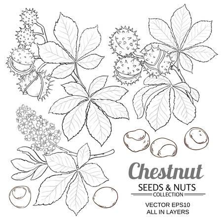 chestnut vector isolated Vetores