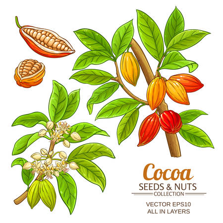 cacaoplant vector