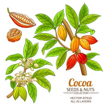 vector de la planta de cacao
