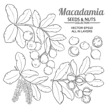 macadamia plant vector