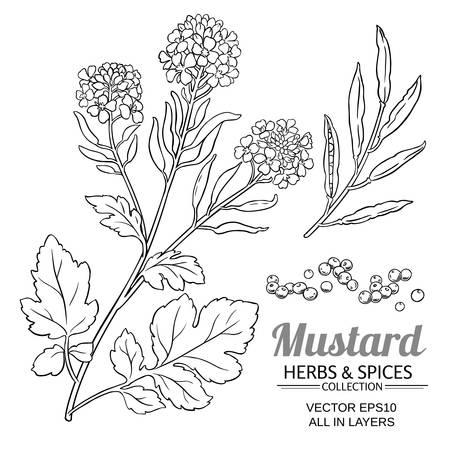 Vector de planta de mostaza Foto de archivo - 107855560