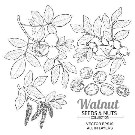 walnut plant vector