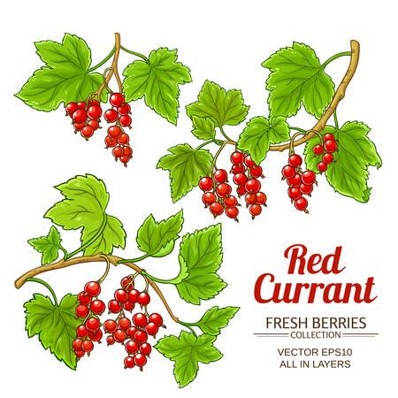 Pflanzenvektor der roten Johannisbeere