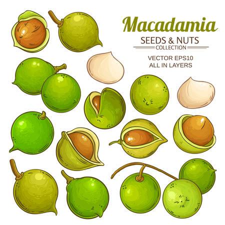 macadamia plant vector Vector Illustration