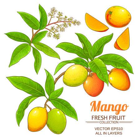 mango vector set 向量圖像