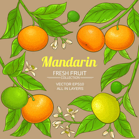 cadre de vecteur mandarin Vecteurs
