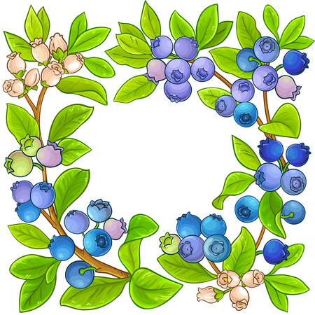 blueberry vector frame on white background
