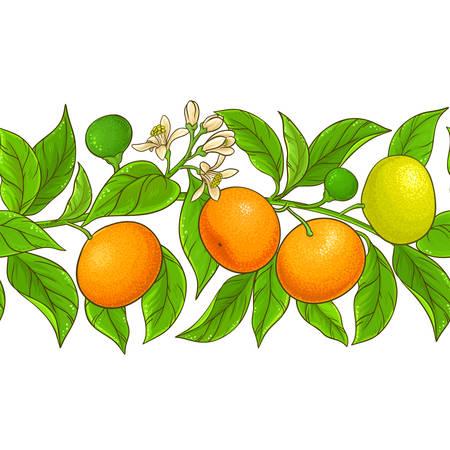 mandarin vector pattern on white background