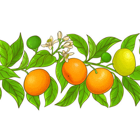modello vettoriale mandarino su sfondo bianco Vettoriali
