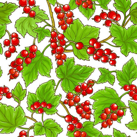 red currant pattern on white background Illustration