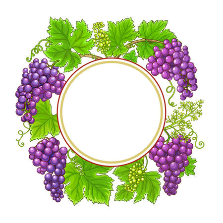 grapes vector frame