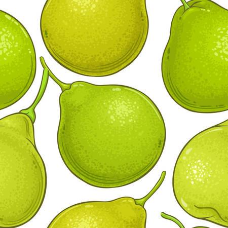 bergamot fruit vector pattern on white background