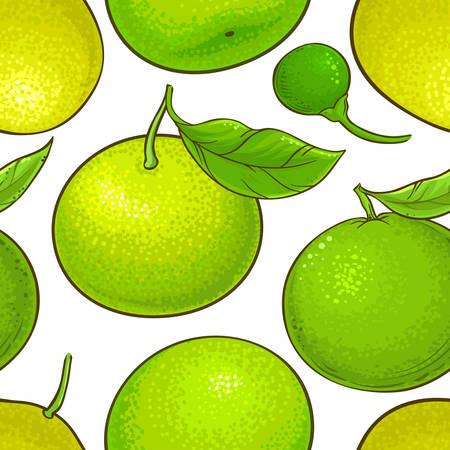 green mandarin fruit vector pattern white background