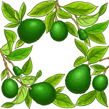 avocado vector frame on white background