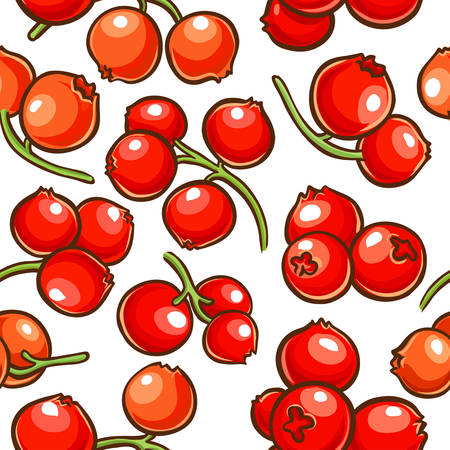 cranberry berries vector pattern on white background