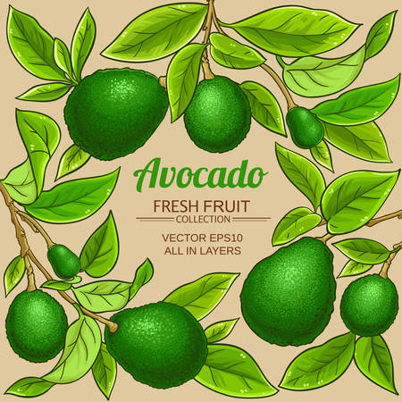 avocado vector frame on color background Illustration