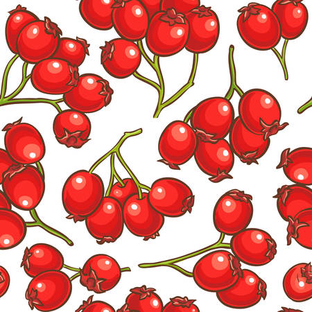 hawthorn berries vector pattern on white background Illustration