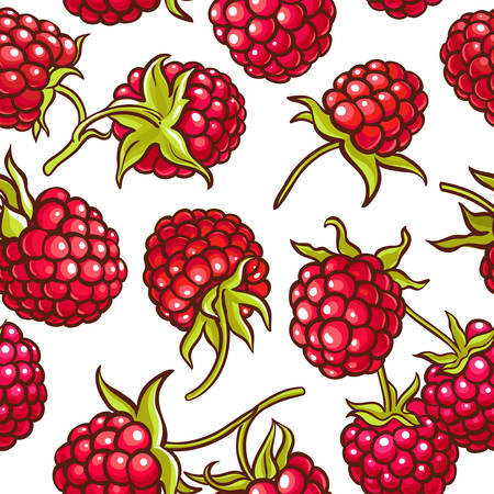 raspberry berries vector pattern on white background