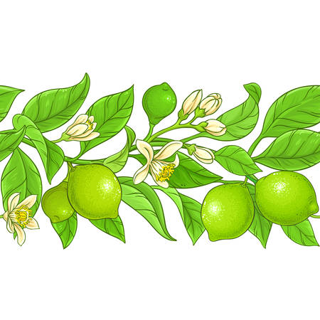 lime vector pattern on white background