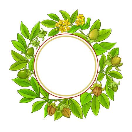 jojoba vector frame on white background Illustration