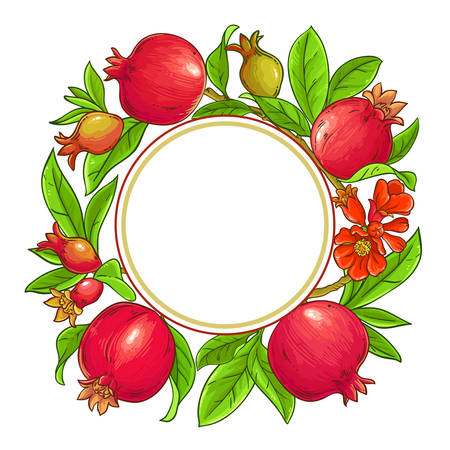 pomegranate vector frame on white background