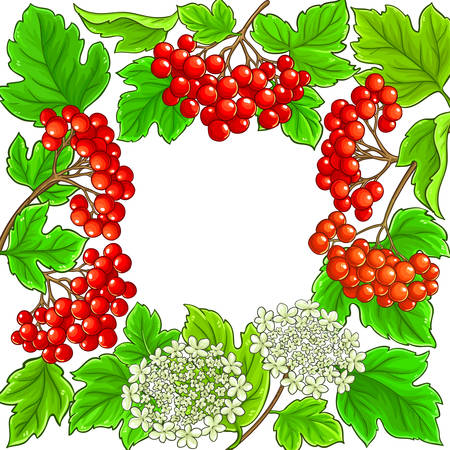 guelder rose vector frame on white background Vectores