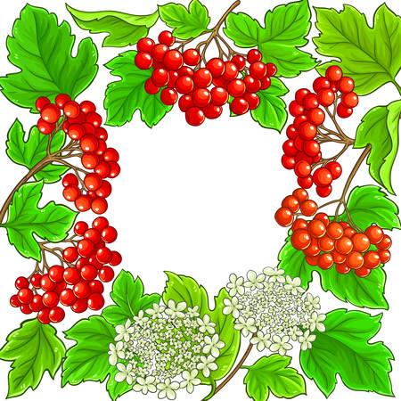 guelder rose vector frame on white background Illustration