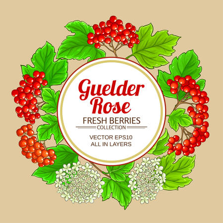 guelder rose vector frame on color background Vectores