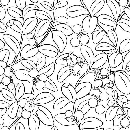 lingonberry vector pattern on white background Illustration