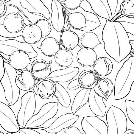 macadamia vector pattern