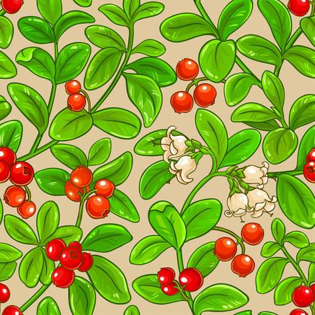 lingonberry vector pattern on color background Illustration