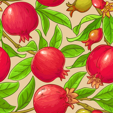 pomegranate vector pattern on color background