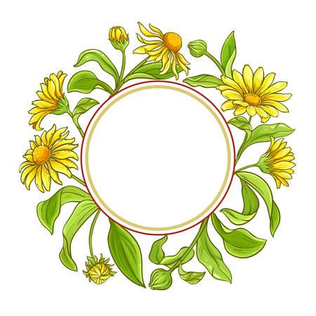 arnica vector frame on white background