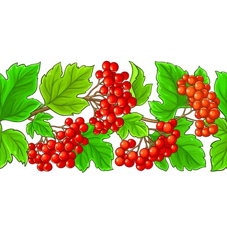 guelder rose vector pattern on white background