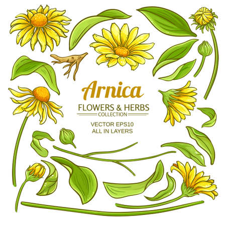 arnica elements vector set on white backgroung