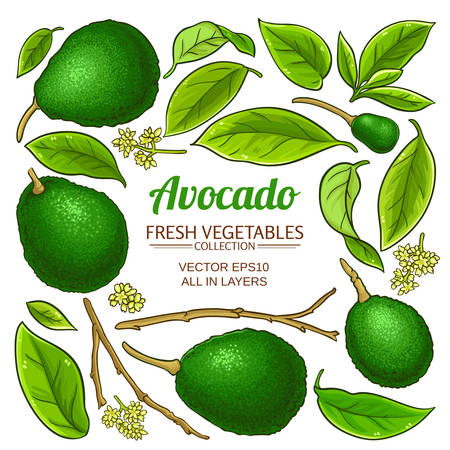 avocado elements vector set on white background