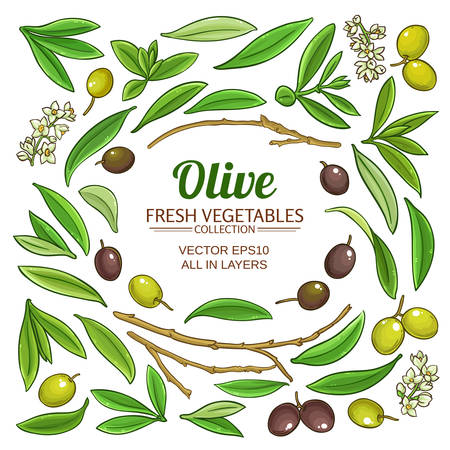 olive elements vector set on white background