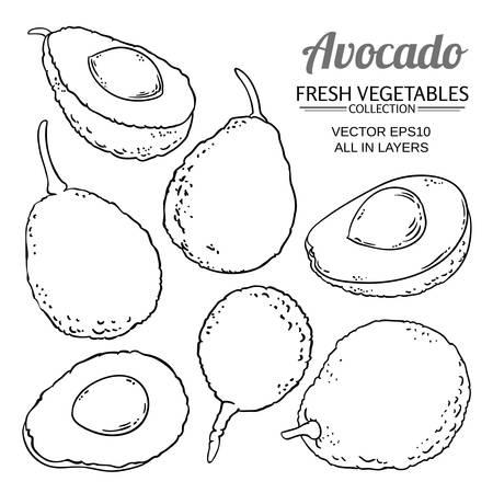 avocado fruits vector set on white background Ilustrace
