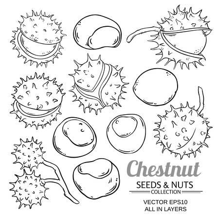chestnut vector set isolated on white background