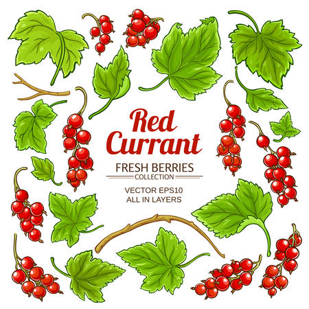 red currant plant vector isolated on white background