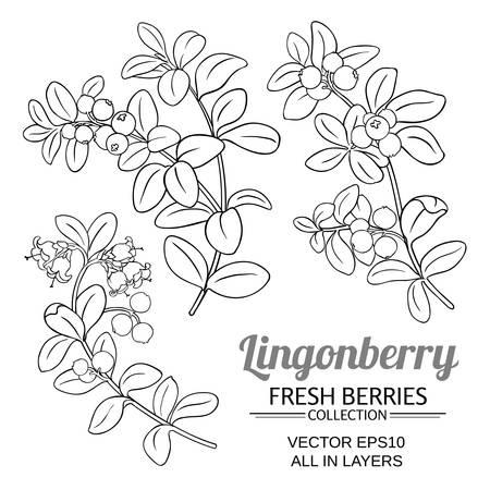 lingonberry plant vector set on white background Ilustrace