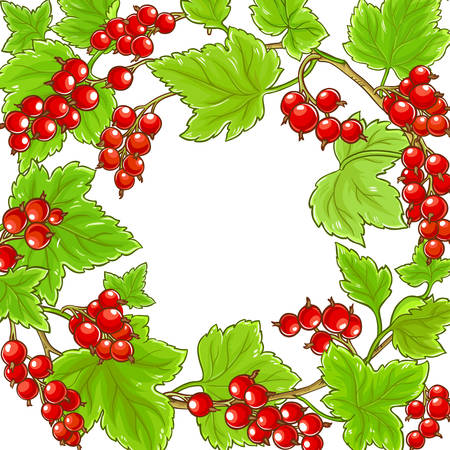 red currant branches vector frame on white background