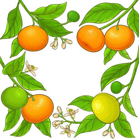 cornice di vettore di rami di mandarino su sfondo bianco Vettoriali