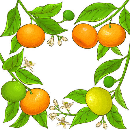 mandarin branches vector frame on white background