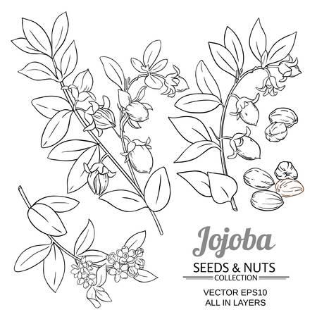 jojoba plant vector set on white background